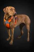 hurtta_lg_visibility_harness_orange_dog2_1_