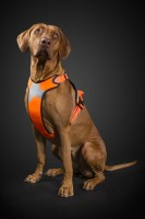 hurtta_lg_visibility_harness_orange_dog_1_