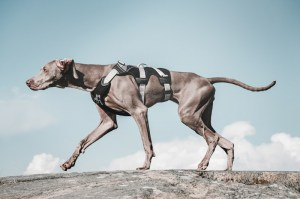 hurtta_trail_harness-4