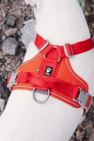 hurtta_weekend_warrior_harness_rosehip_lifestyle_1