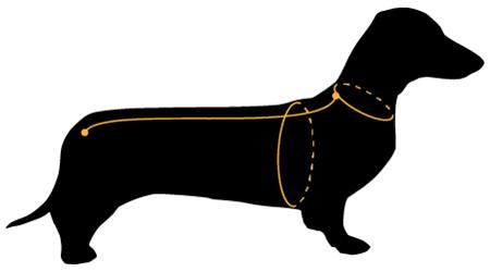 Как измерять собаку чтобы купить одежду